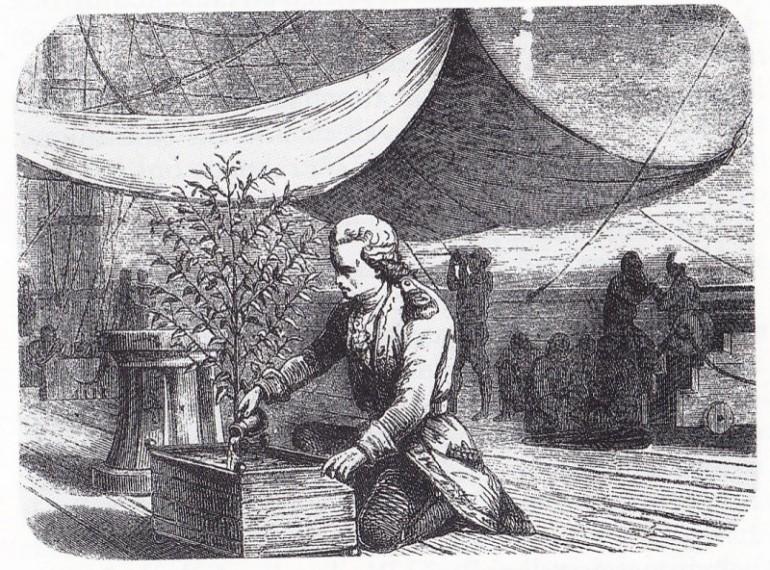 Gabriel de Clieu